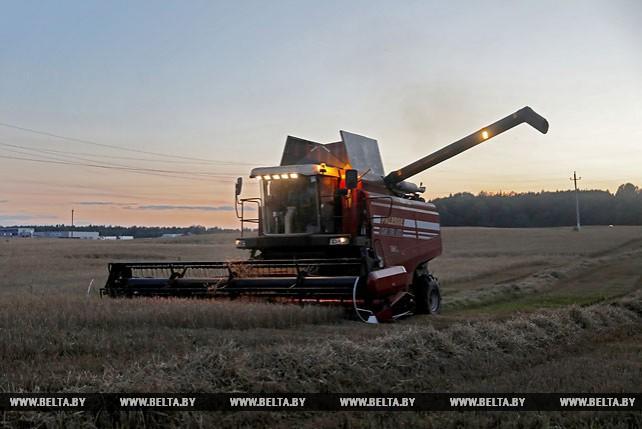 В Витебском районе сельхозработы идут до поздней ночи