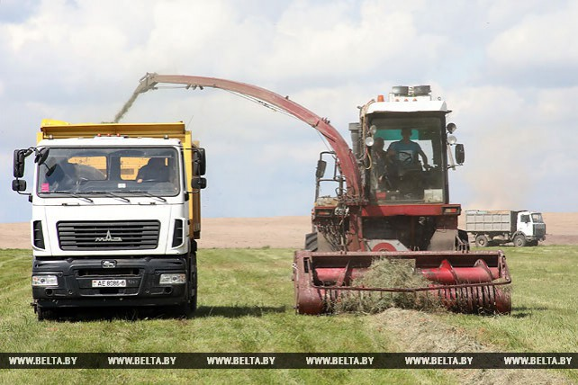 Заготовка сенажа идет в Бобруйском районе