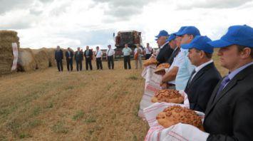 Шкловский район первым в области преодолел стотысячный рубеж по намолоту зерна