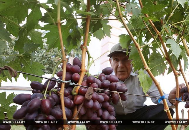В Ельске прошел мастер-класс по выращиванию винограда