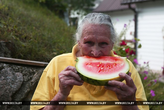 Около 20 арбузов вырастила на приусадебном участке пенсионерка из Гродненского района