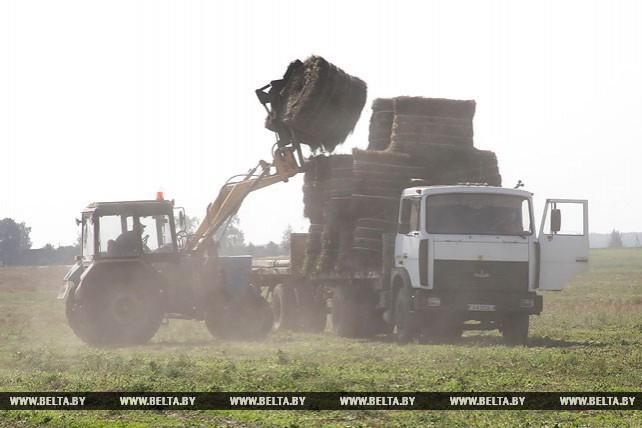 Уборка льна идет в Буда-Кошелевском районе