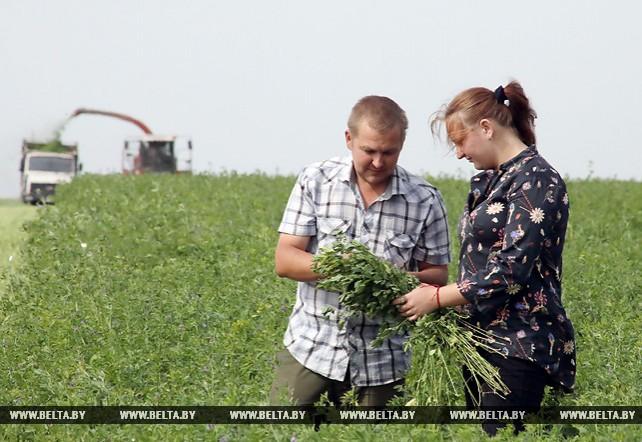 Заготовка кормов ведется в Гомельской области