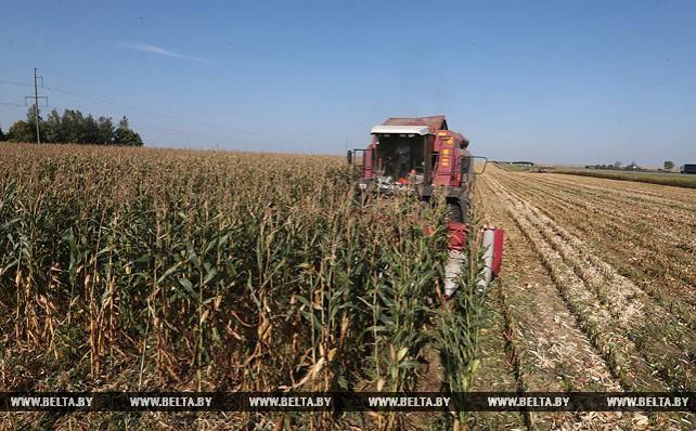 Уборка сахарной свеклы и кукурузы будет завершена до 1 ноября