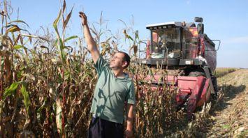 В Гомельской области в 10 раз увеличили темпы уборки кукурузы к уровню 2017 года