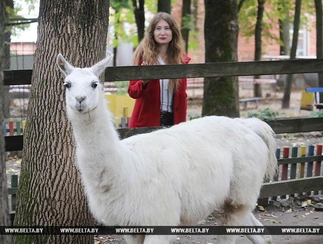 В Витебском зоопарке поселилась белая лама