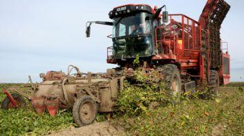 Уборка сахарной свеклы идет в Гродненском районе