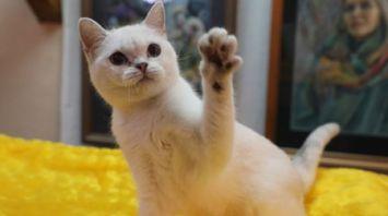 Республиканская выставка кошек в Витебске