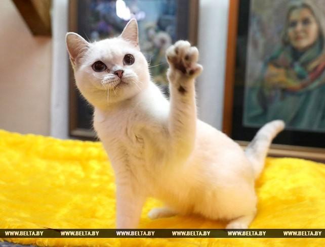 Республиканская выставка кошек прошла в Витебске