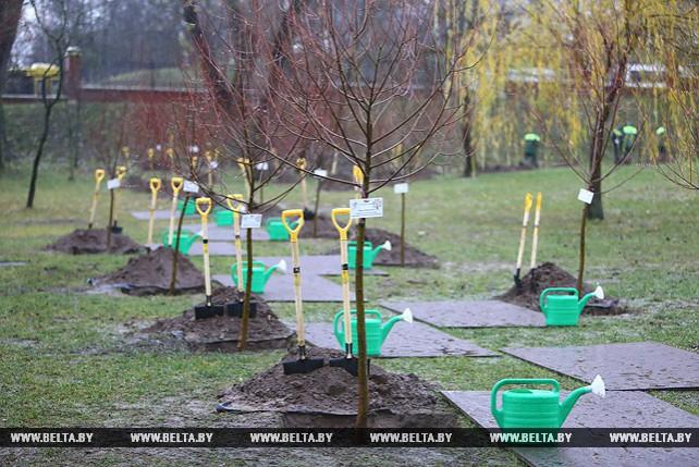 Деревья в честь 150-летия со дня рождения Ганди посадили в Лошицком парке