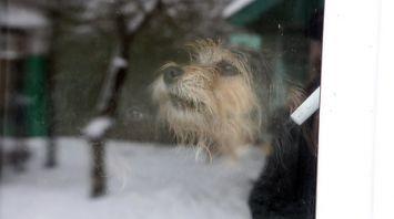 Приют для бездомных и больных домашних животных содержит жительница Речицкого района