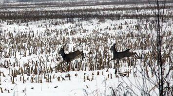 В Гомельском районе прошла показательная охота на копытного зверя