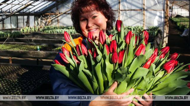 """Около 100 тыс. цветов вырастил брестский """"Коммунальник"""" к 8 Марта"""