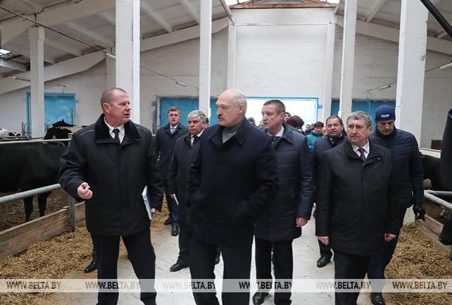 """Лукашенко посетил молочно-товарный комплекс """"Слижи"""" в Шкловском районе"""