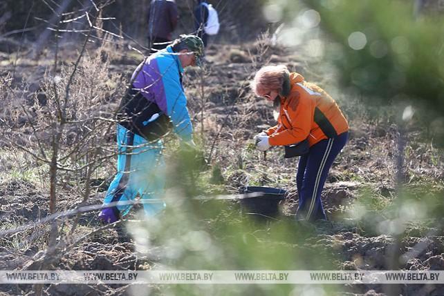 Молодой сосновый лес высадили в окрестностях Августовского канала