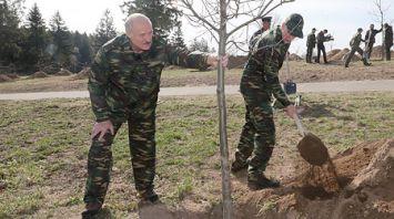 """Лукашенко принял участие в посадке деревьев на """"Линии Сталина"""""""
