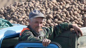 В Мозырском районе завершается посадка картофеля