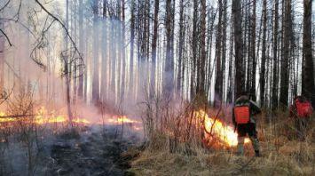 В Столинском районе горят Ольманские болота