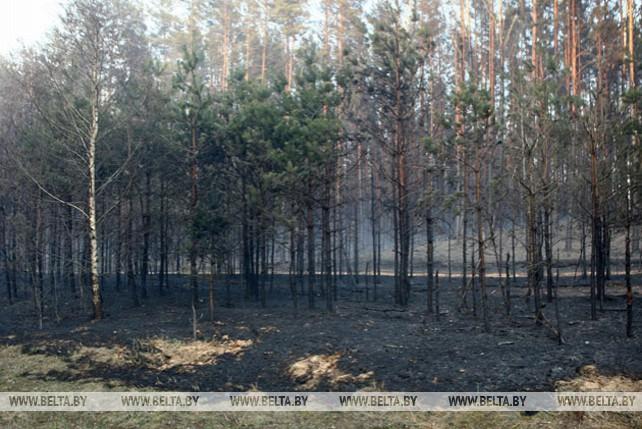 Лесной пожар под Гродно локализован