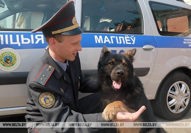 В Могилевском областном управлении Департамента охраны несут службу 72 собаки