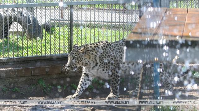 В Гродненском зоопарке животные спасаются от жары
