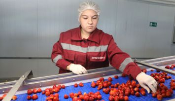 Производство замороженной продукции полного цикла запущено в Оршанском районе