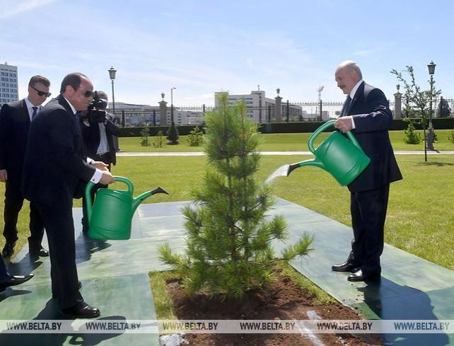 Абдель Фаттах ас-Сиси посадил дерево на Аллее почетных гостей у Дворца Независимости