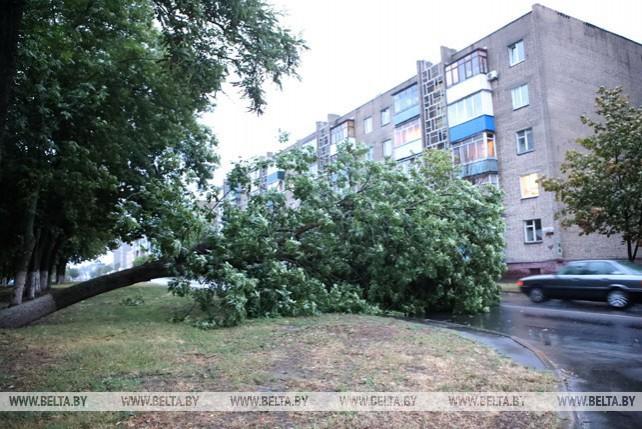 Непогода в Беларуси: поваленные деревья, беседки и нарушенное электроснабжение