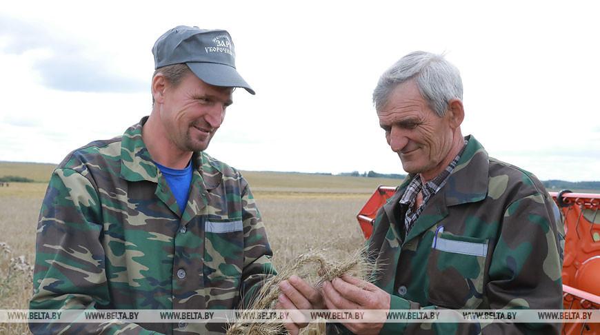 Сразу два экипажа комбайнов в Могилевской области превысили намолот зерна в 2 тыс. т