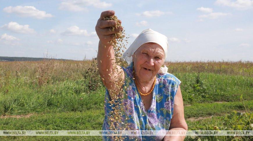 В Могилевском районе идет уборка зерновых на частных подворьях