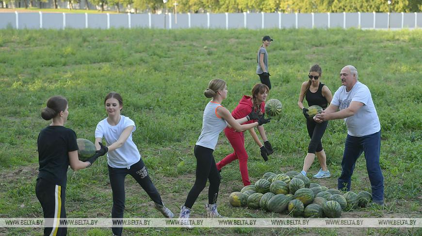 Лукашенко после официальных мероприятий занялся уборкой арбузов на приусадебном участке