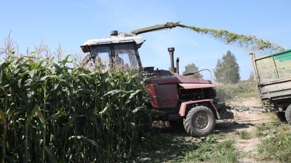 Все районы Гомельской области приступили к уборке кукурузы на силос