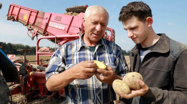 В Кировском районе идет уборка картофеля