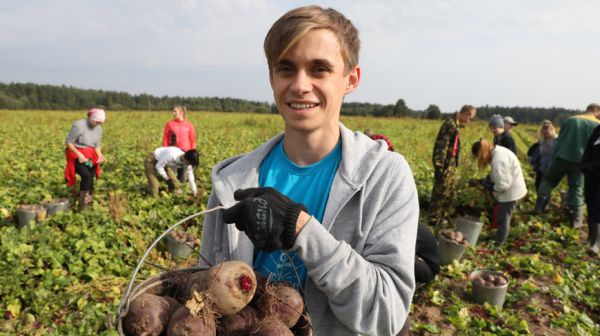 Студенты помогают хозяйствам Витебского района в уборке урожая