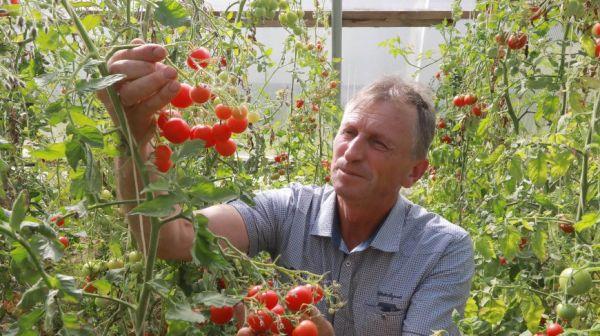 Сотрудники БГСХА выводят новые сорта томатов и перца