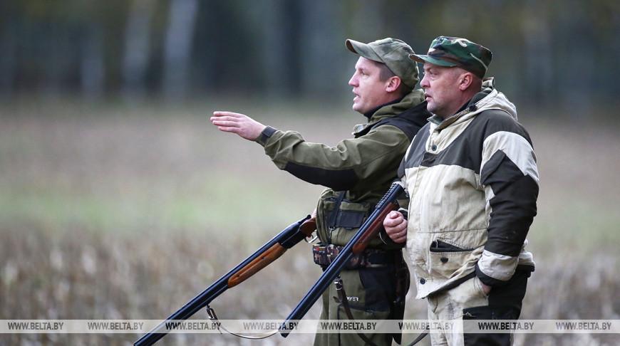 В Беларуси открылся сезон загонной охоты на копытных