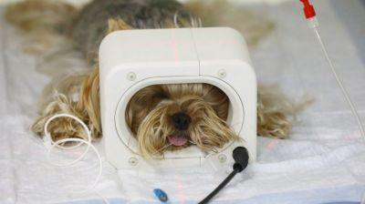 Первый в Беларуси аппарат для проведения МРТ у животных установлен в Витебске