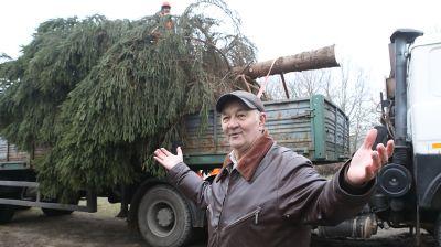 Дачник подарил новогоднюю ель микрорайону Гомеля