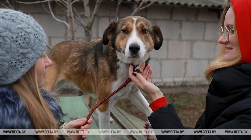 Могилевские волонтеры помогают бездомным животным
