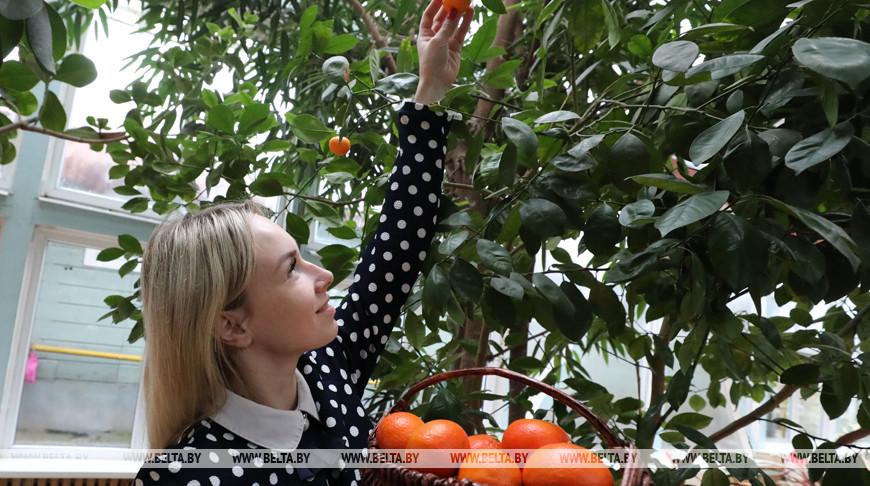 Зимняя сказка в оранжерее агроусадьбы в Чашникском районе