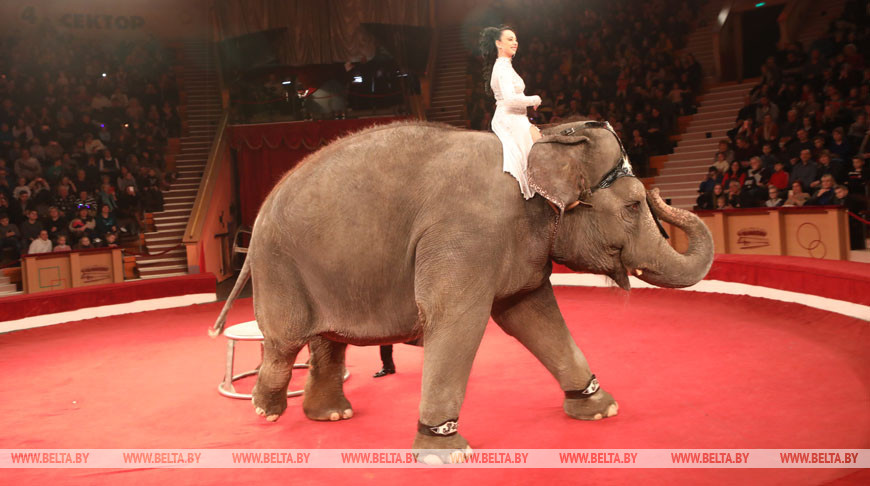 """Гомельский цирк представил программу """"Индийский слон и карамболь"""""""