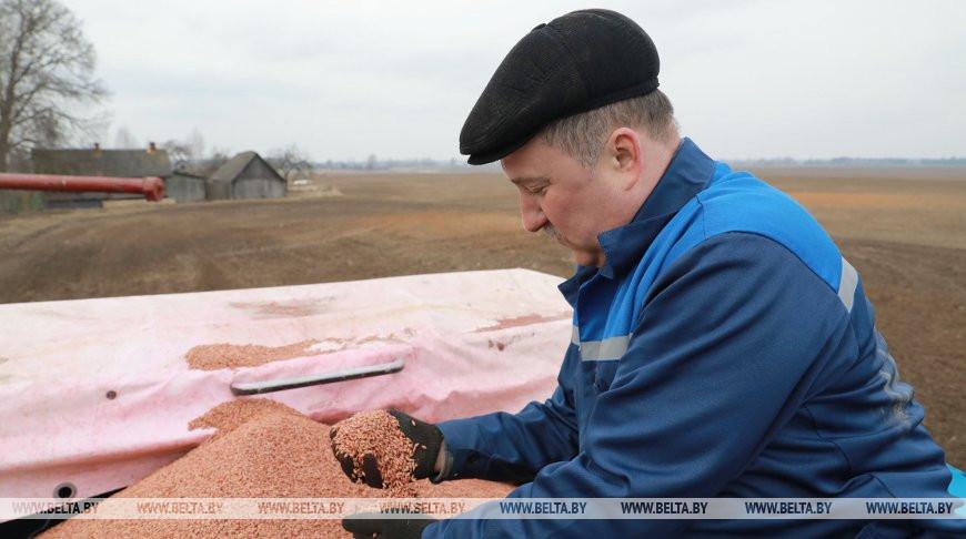 В четырех районах Могилевской области началась посевная