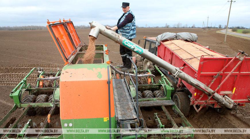К севу яровых зерновых культур приступили в Речицком районе