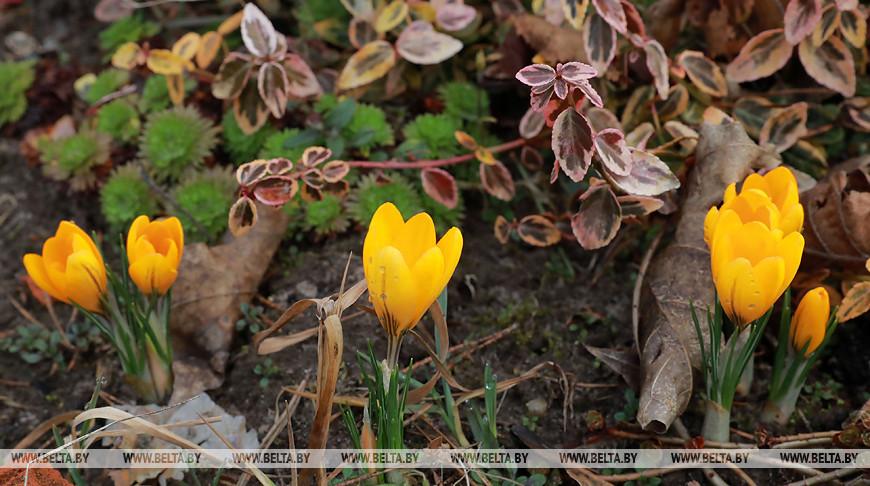В Могилевском районе наступила настоящая весна