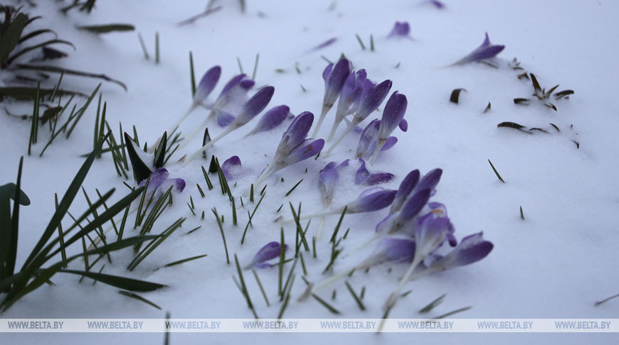 Снег в Гродно
