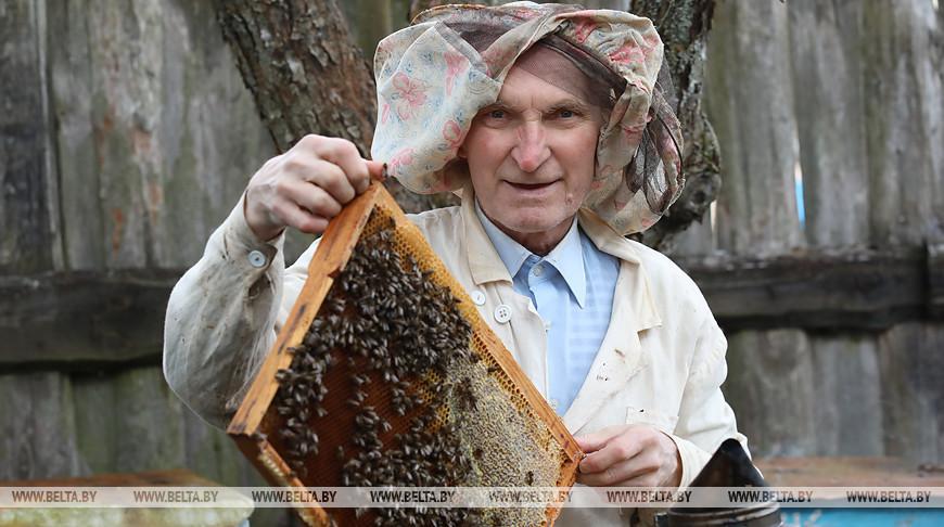 Гомельские пчеловоды проверяют активность пчел после зимовки
