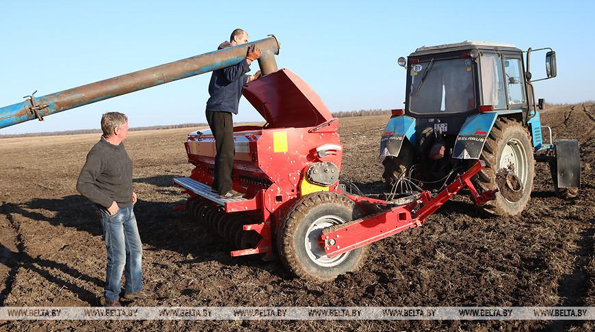 Сев зерновых ведется в Буда-Кошелевском районе