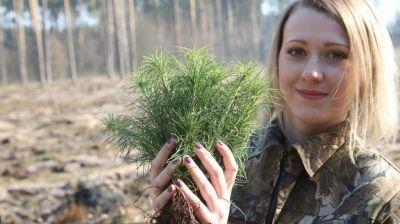 """Более 15 млн молодых деревьев высадят во время """"Недели леса"""" в Гомельской области"""