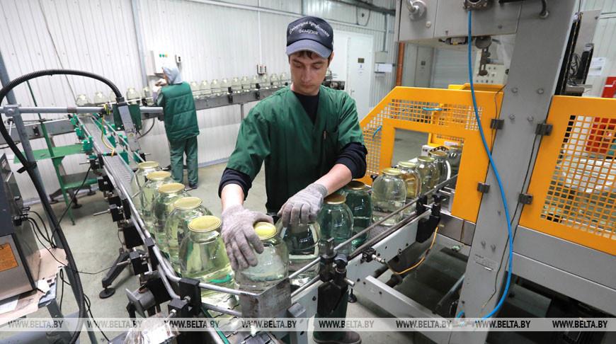 Быховский консервно-овощесушильный завод консервирует березовый сок