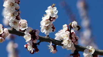 Весеннее цветение в Гомеле